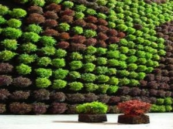 Artificial Vertical Garden Manufacturer in Delhi