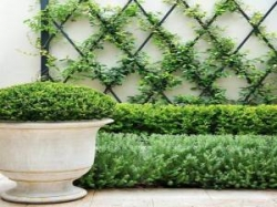 Natural Vertical Garden Manufacturer in Delhi